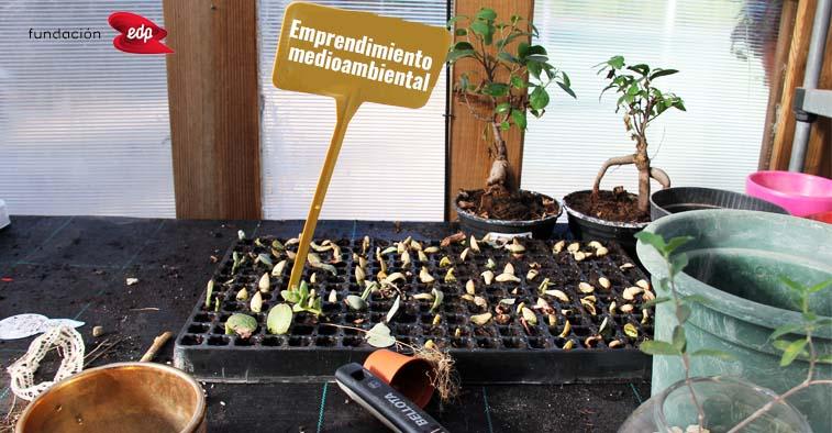 Emprendimiento medioambiental centro 3 Olivos